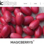 Ronda de inversión de 120.000 euros en MagicBerrys