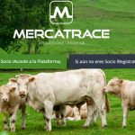Mercatrace consigue 90 mil euros con equity crowdfunding